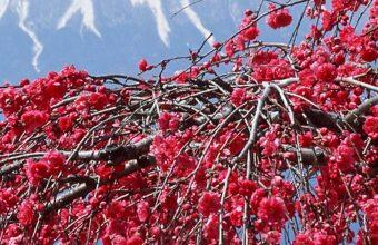 Vernal Equinox In Japan Japan Sakura 1080x2340 340x220