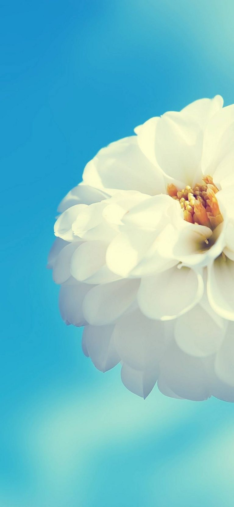 White Flower And Blue Sky 1080x2340 768x1664