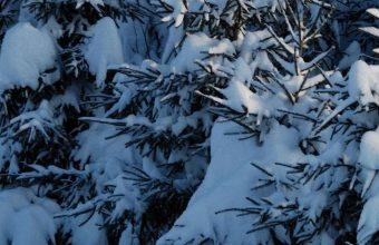 Winter Fir Trees Snow 1080x2340 340x220