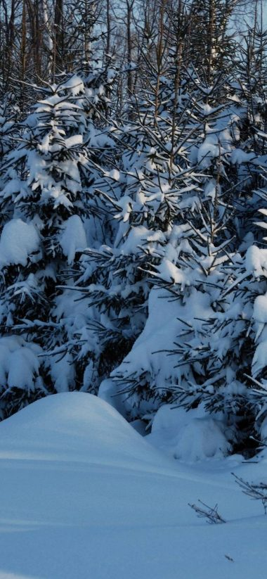 Winter Fir Trees Snow 1080x2340 380x823