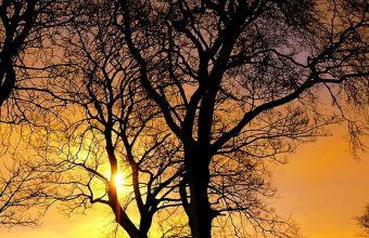 Winter Trees Sunset 1080x2340 340x220