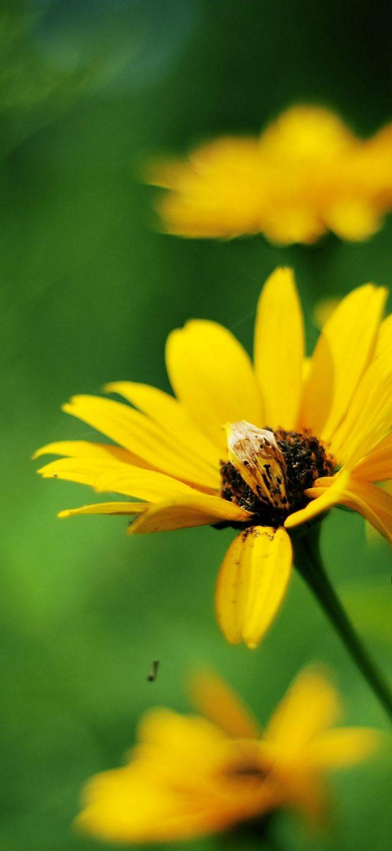 Yellow Summer Flowers 1080x2340 768x1664