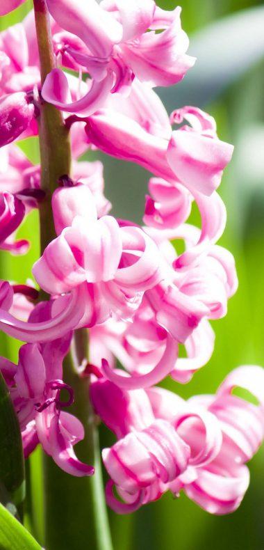 Amazing Pink Flowers 1080x2244 380x790