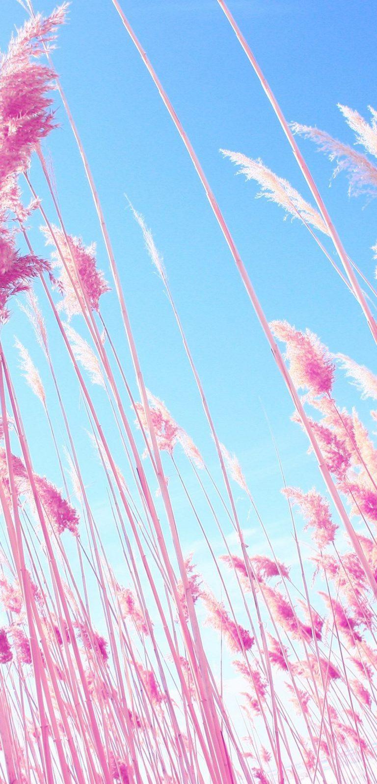 Grass On Beach 1080x2244 768x1596