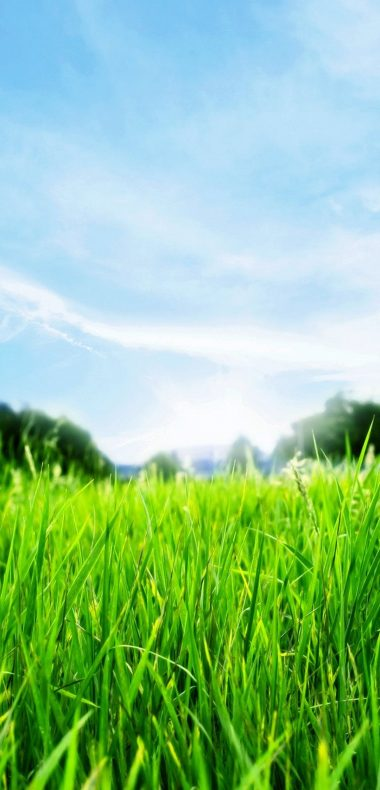 Green Grass HD 1080x2244 380x790