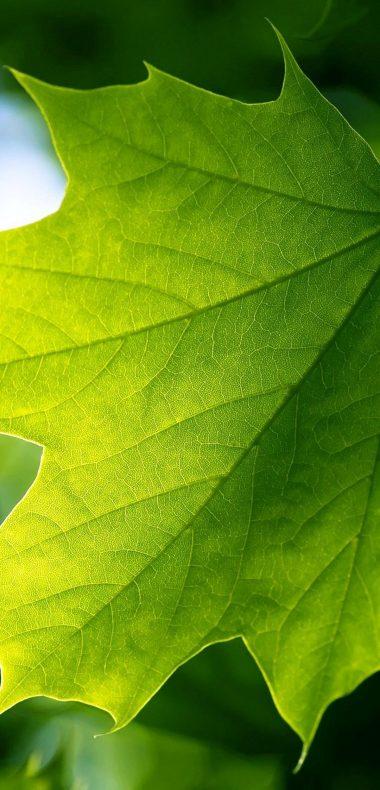 Green Leaf 1080x2244 380x790