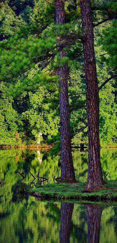 Green Trees Forest Lakes Reflections 1080x2244 380x790