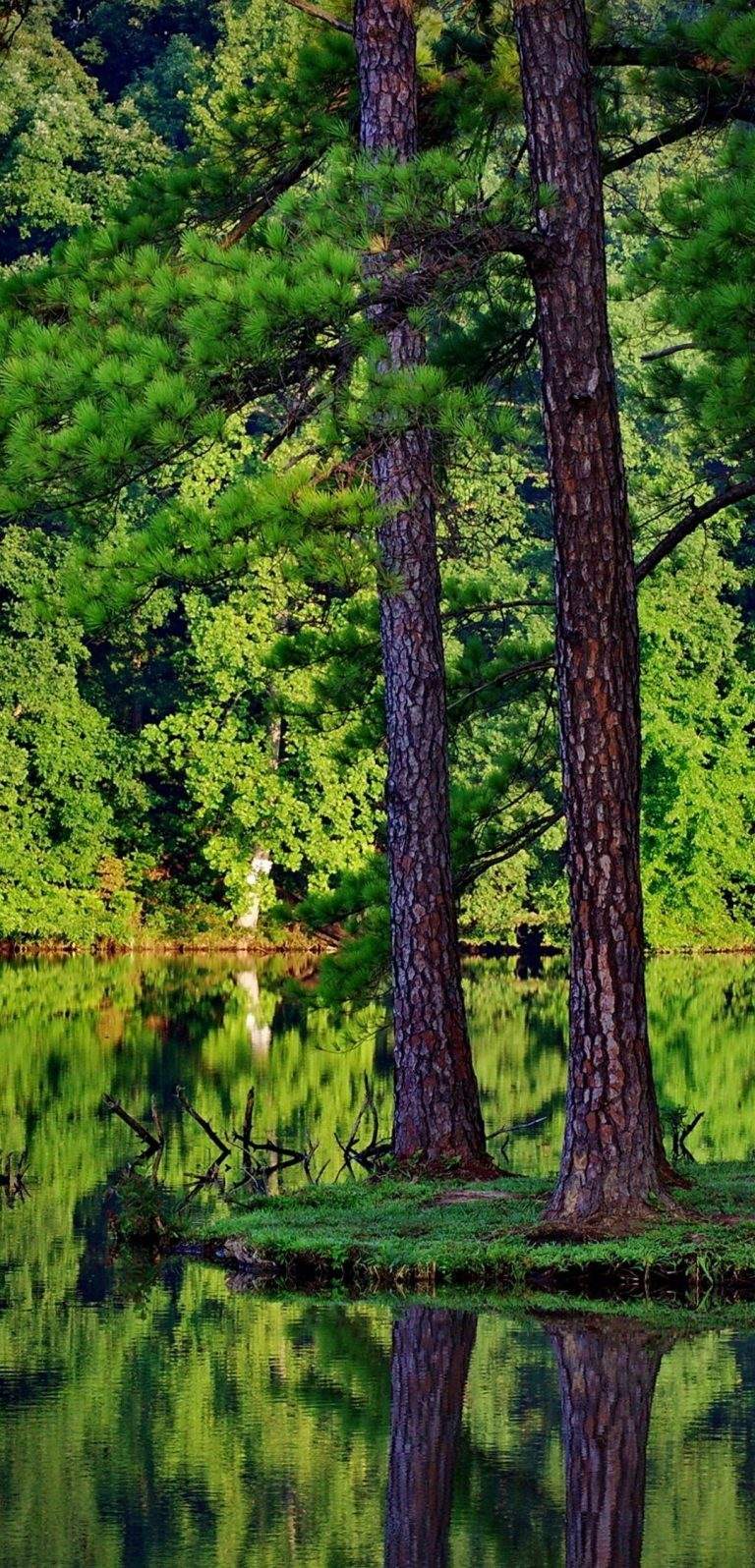 Green Trees Forest Lakes Reflections 1080x2244 768x1596