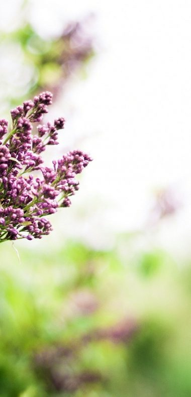 Lilac Branch Spring 1080x2244 380x790