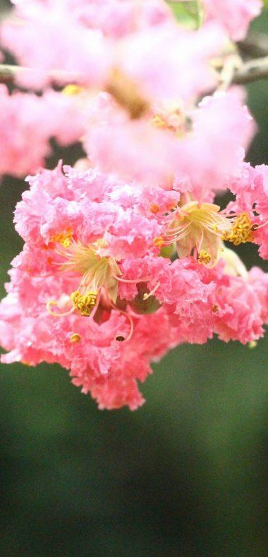 Natural Beauty Of A Flower Wallpaper 1080x2244 380x790