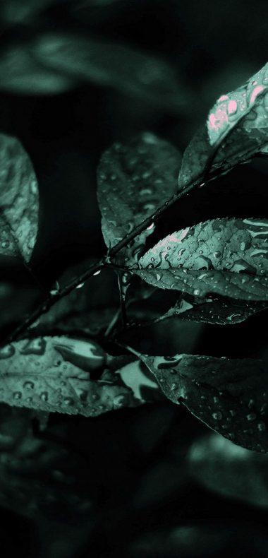 Nature Dark Leaves Macro Depth 1080x2244 380x790