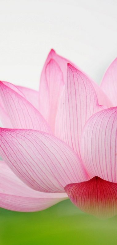 Nature Flower Garden Love Pink Lily Lotus 1080x2244 380x790