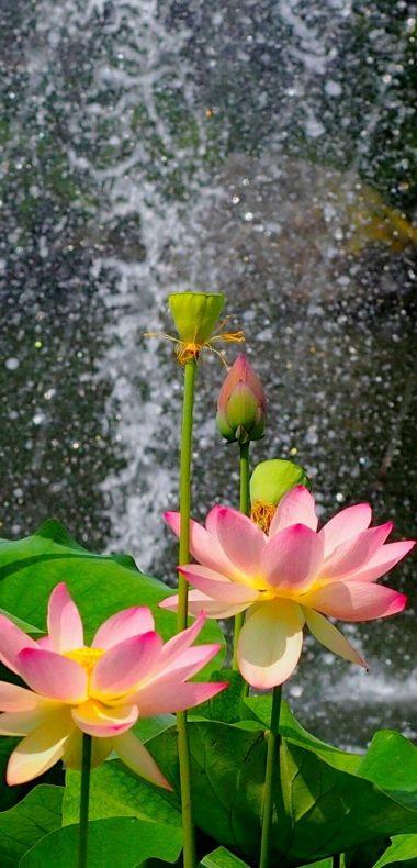 Nature Flower Garden Wild Pink Hd 1080x2244 380x790