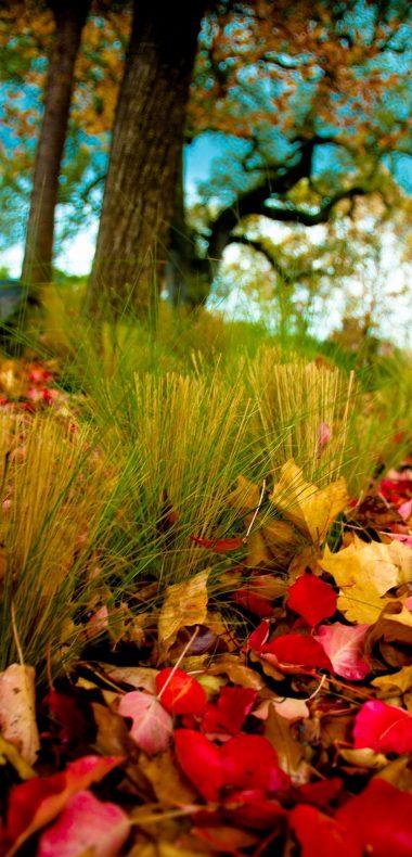 Nature Flower Wallpaper 1080x2244 380x790