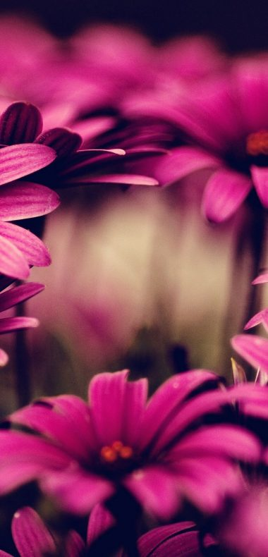 Nature Flowers Pink 1080x2244 380x790