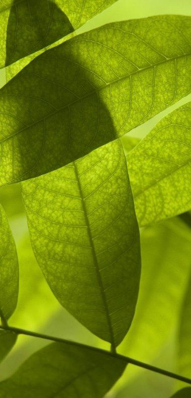 Nature Leaves Digital Art Macro 1080x2244 380x790