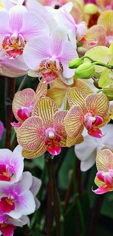 Orchids Flowers Petals 1080x2244 380x790