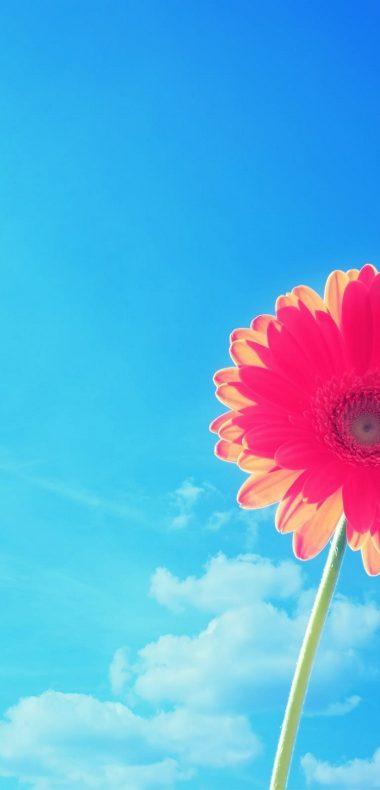 Pink Gerbera Flower In Sky 1080x2244 380x790