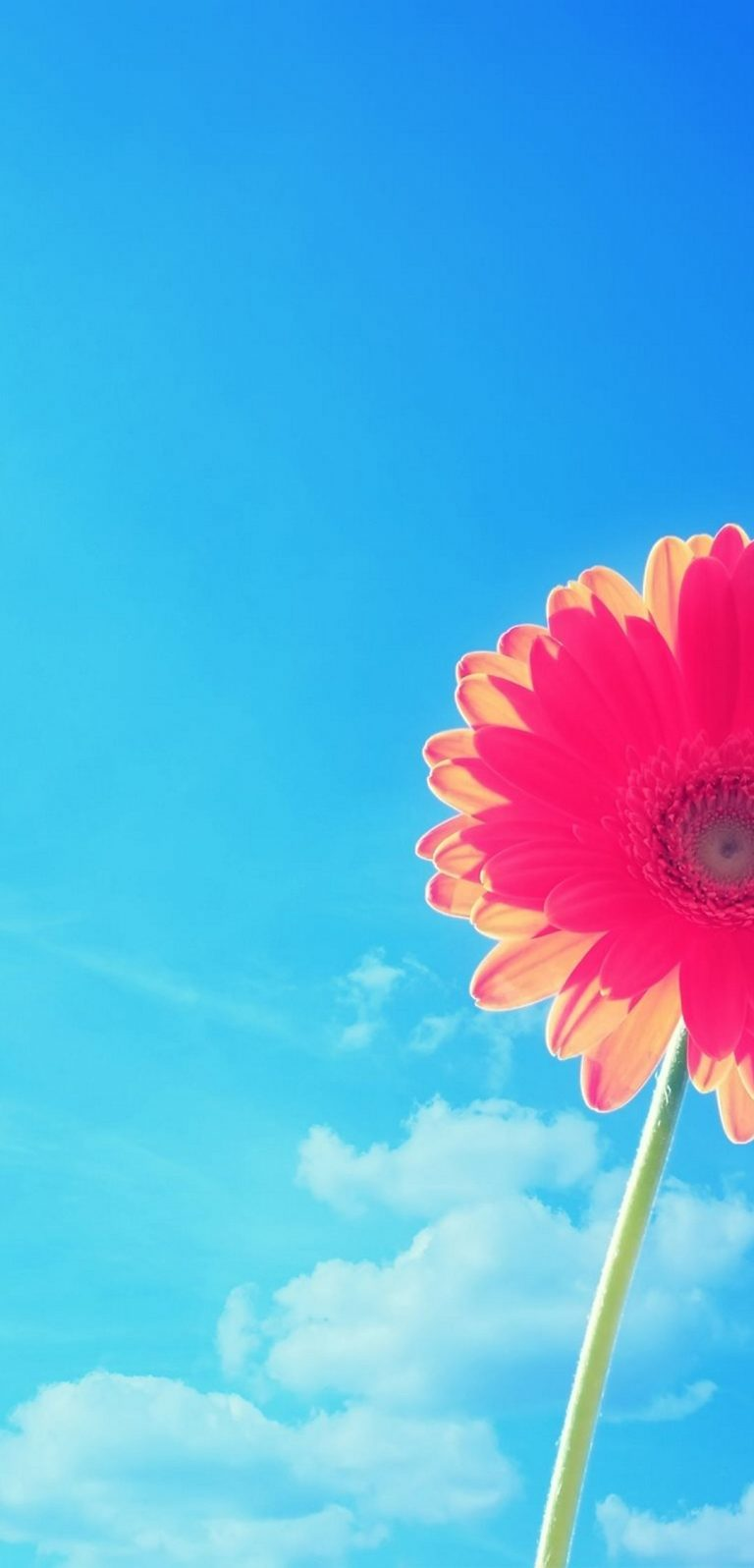 Pink Gerbera Flower In Sky 1080x2244 768x1596