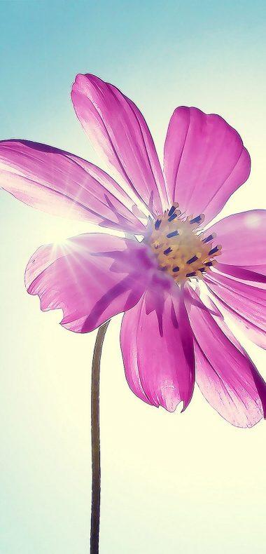 Purple Magenta Flower 1080x2244 380x790