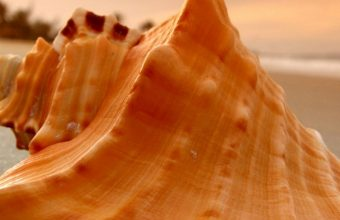 Sand Beach Shell Sea 1080x2244 340x220