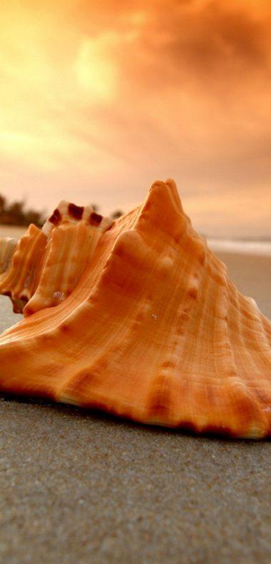 Sand Beach Shell Sea 1080x2244 380x790