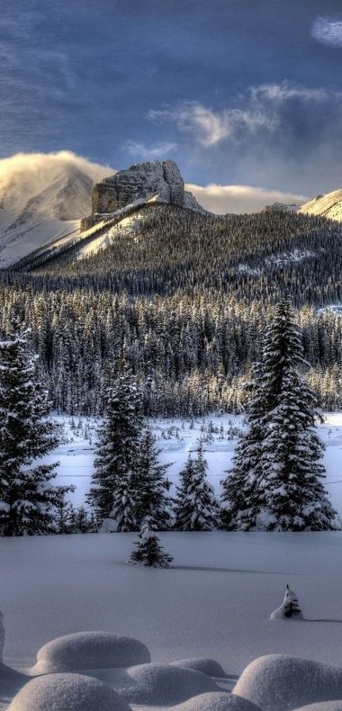 Snow Winter Trees 1080x2244 380x790