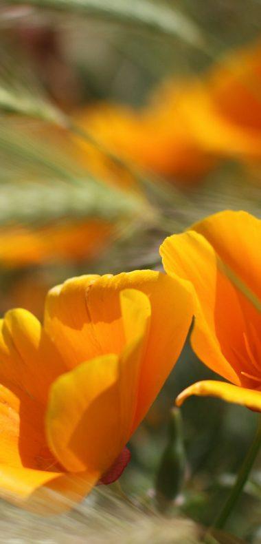 Summer Flowers 1080x2244 380x790