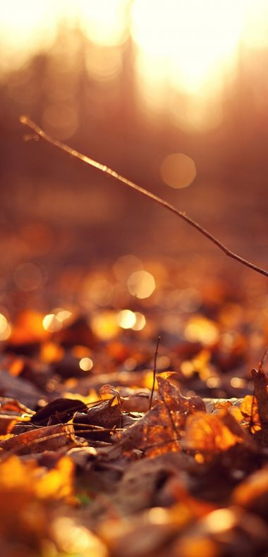 Sun Autumn Macro Leaves 1080x2244 380x790
