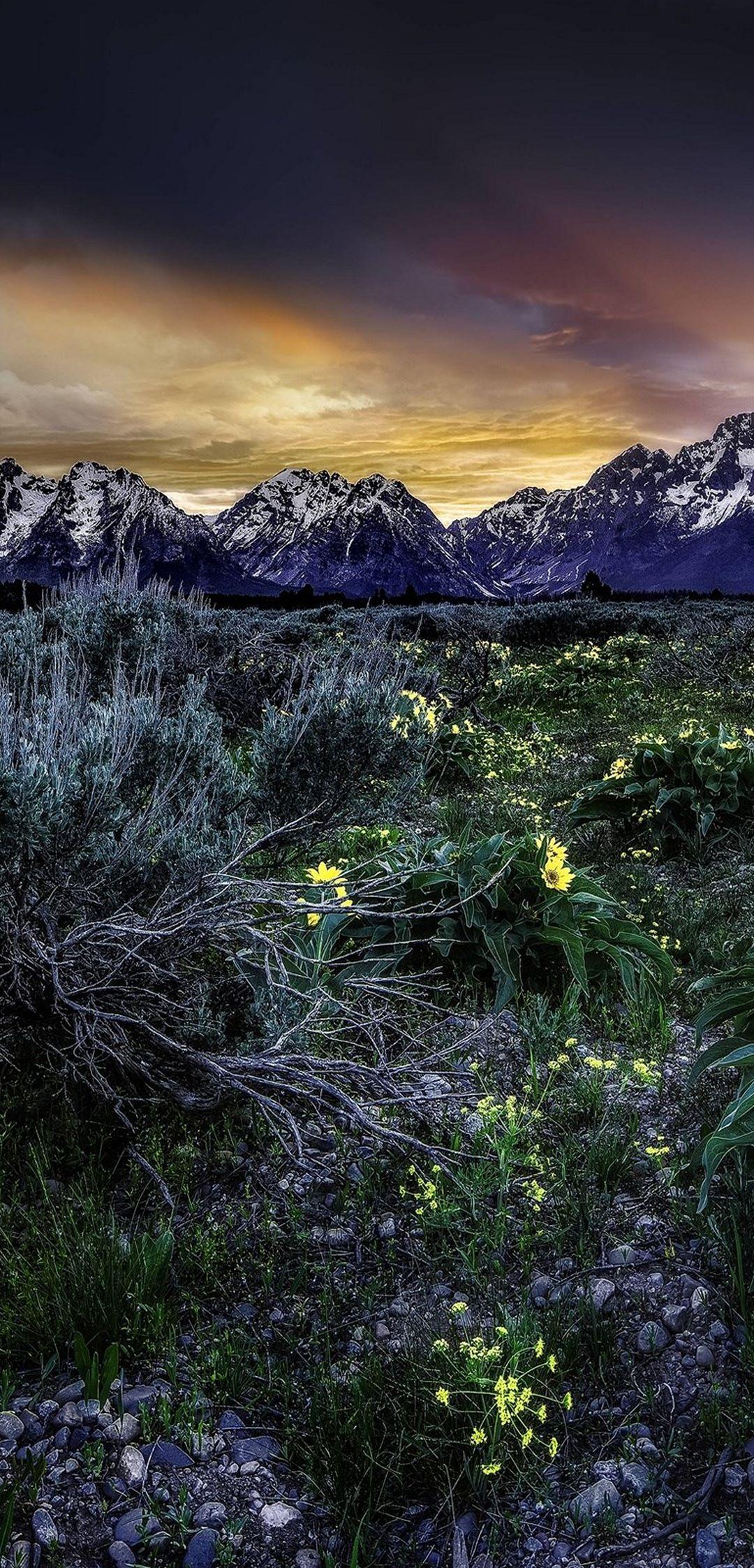 Sunset Mountains Field Flowers