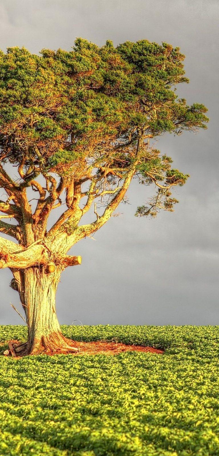 Tree Field Grass 1080x2244 768x1596