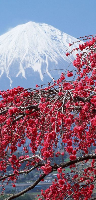 Vernal Equinox In Japan Japan Sakura 1080x2244 380x790