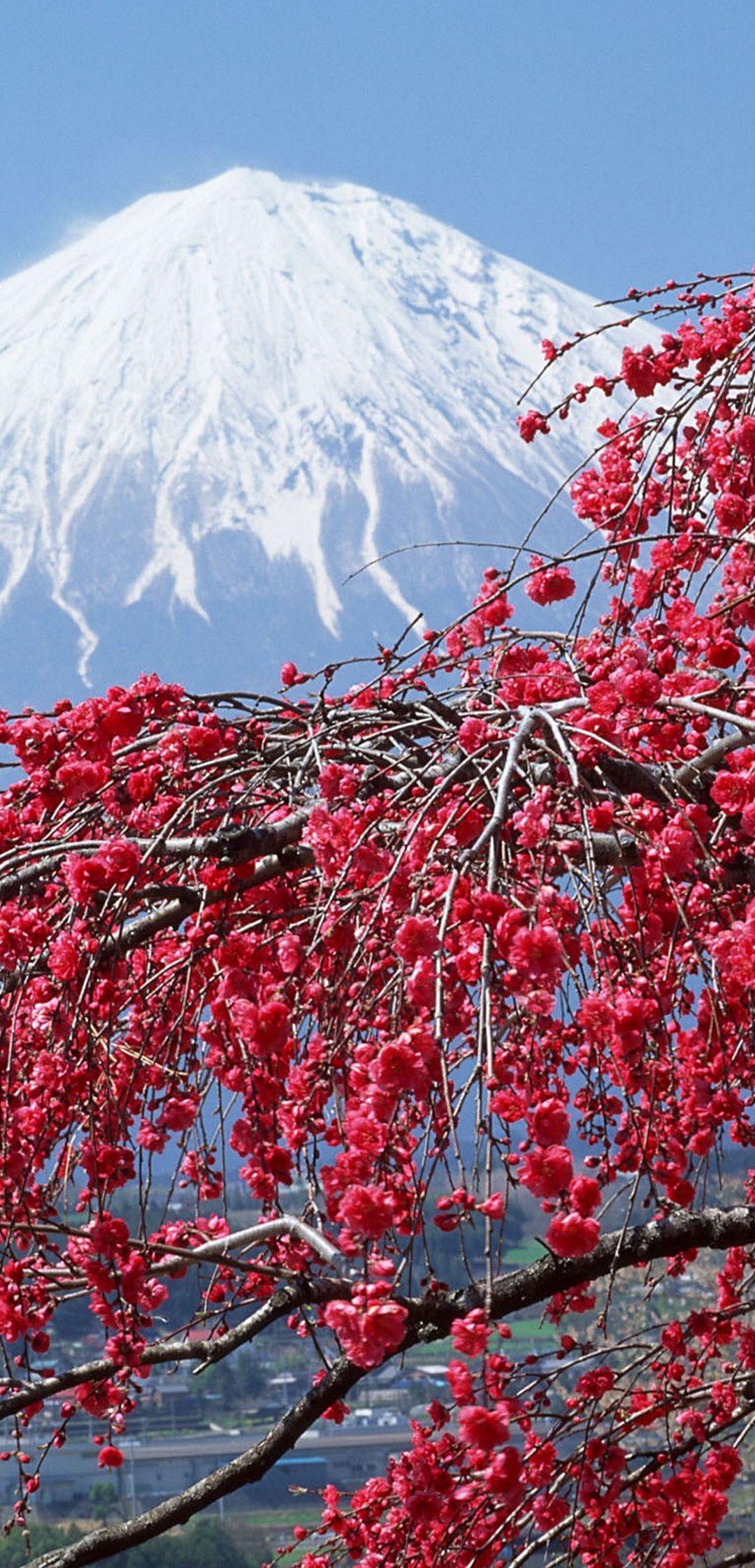Vernal Equinox In Japan Japan Sakura