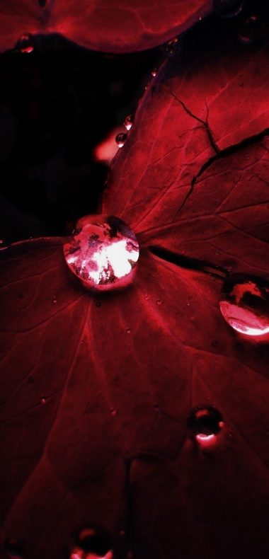 Water Drops On Red Leaf 1080x2244 380x790