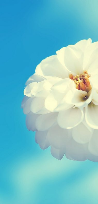 White Flower And Blue Sky 1080x2244 380x790