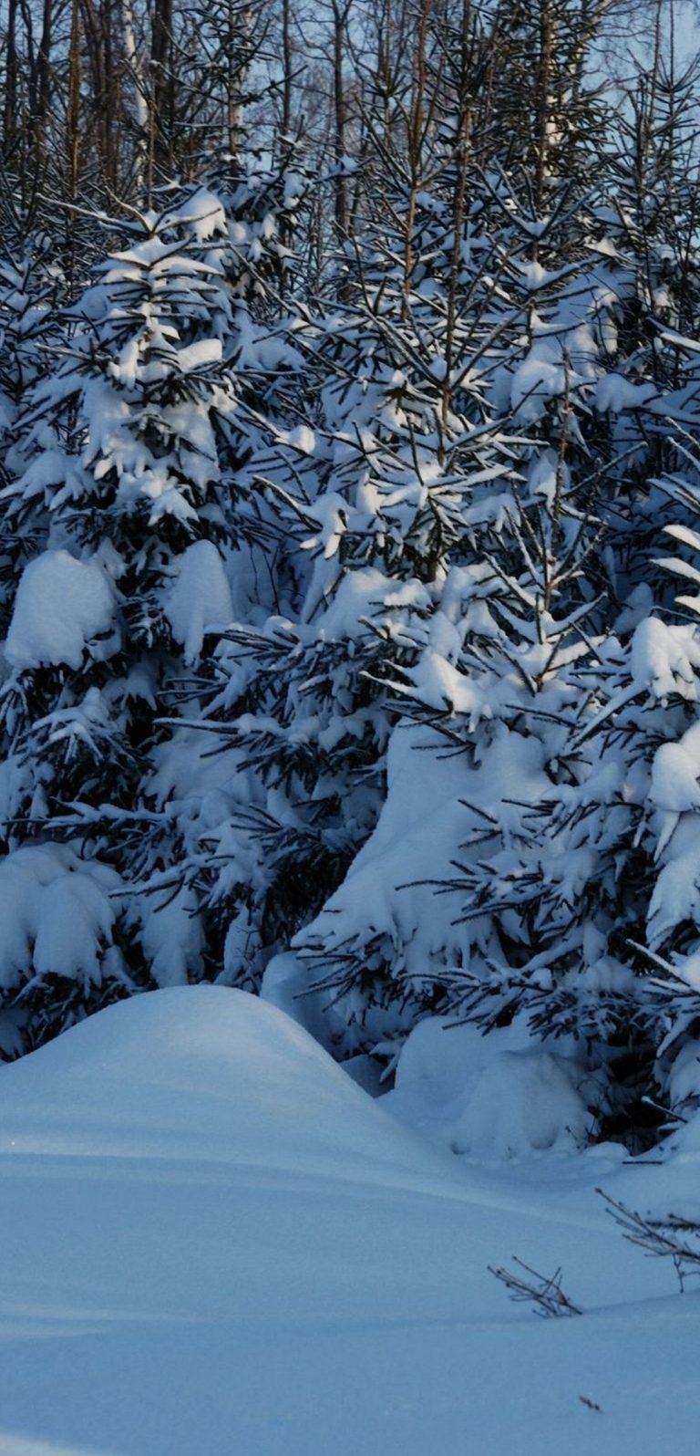 Winter Fir Trees Snow 1080x2244 768x1596