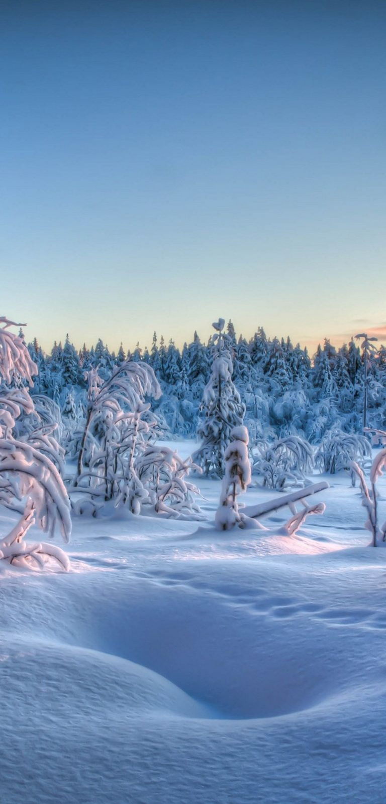 Winter Trees Forest Snow Landscape 1080x2244 768x1596