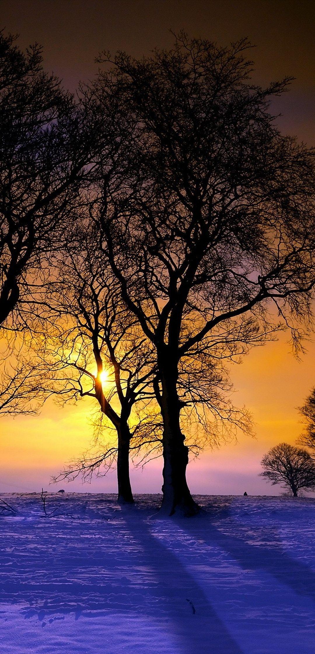 Winter Trees Sunset