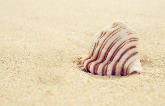Sand Wallpaper 22 2560x1600 340x220