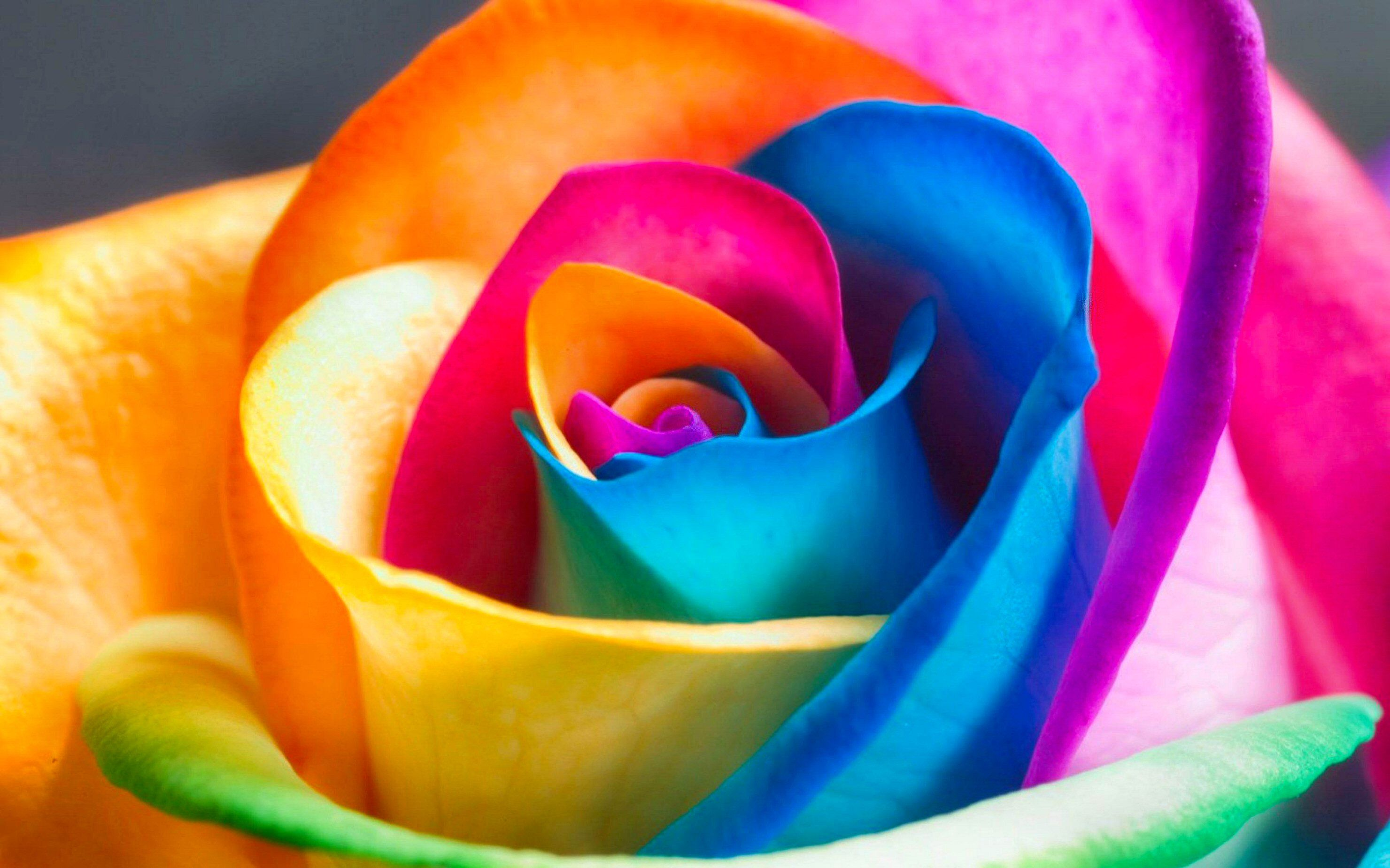 Colorful Wallpaper 011 - [2960x1850]