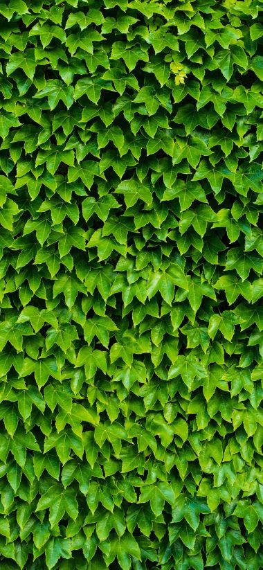 1440x3120 Wallpaper 062 380x823