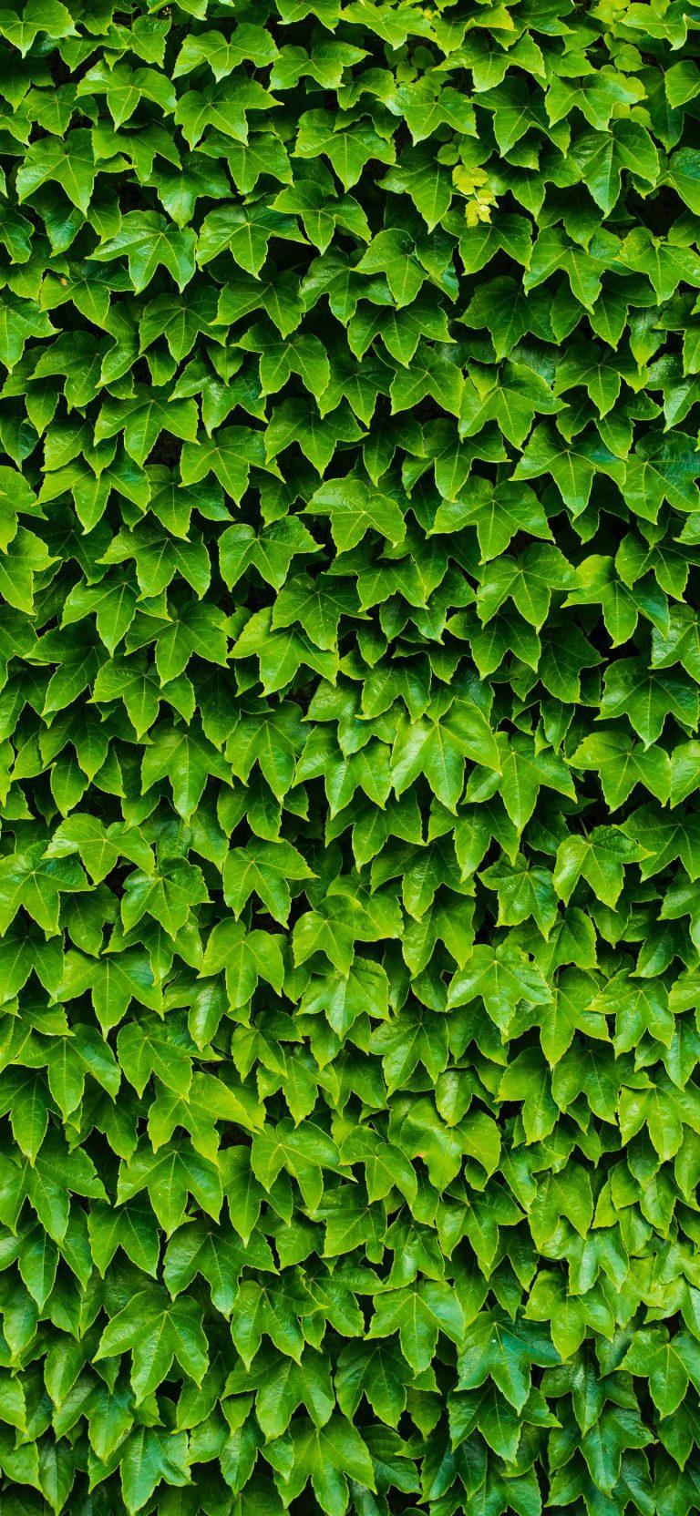 1440x3120 Wallpaper 062 768x1664