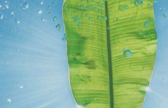 1440x3120 Wallpaper 099 340x220