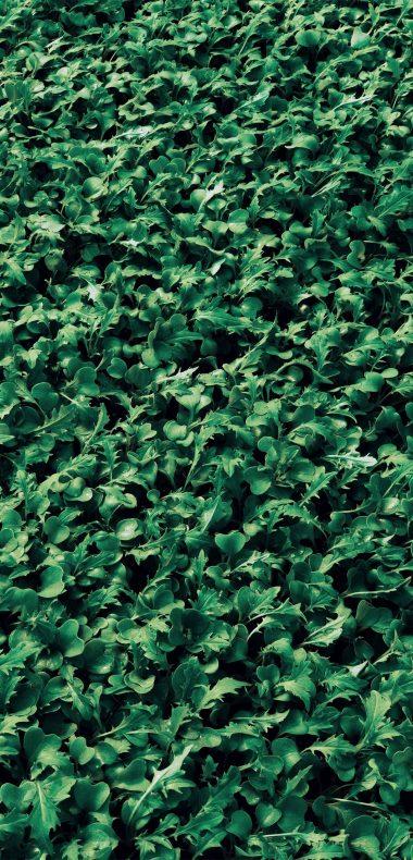 1440x2992 Wallpaper 026 380x790