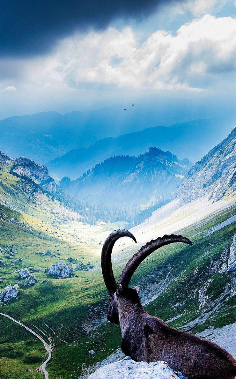 Animal Mountains Landscape 800x1280 768x1229