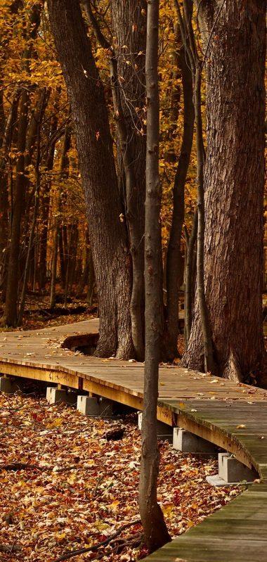 Autumn Foliage Park Trees 1080x2270 380x799