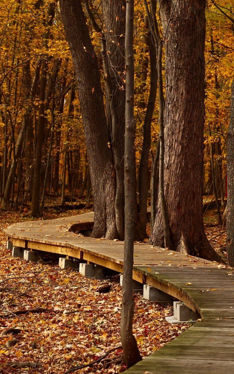 Autumn Foliage Park Trees 800x1280 768x1229