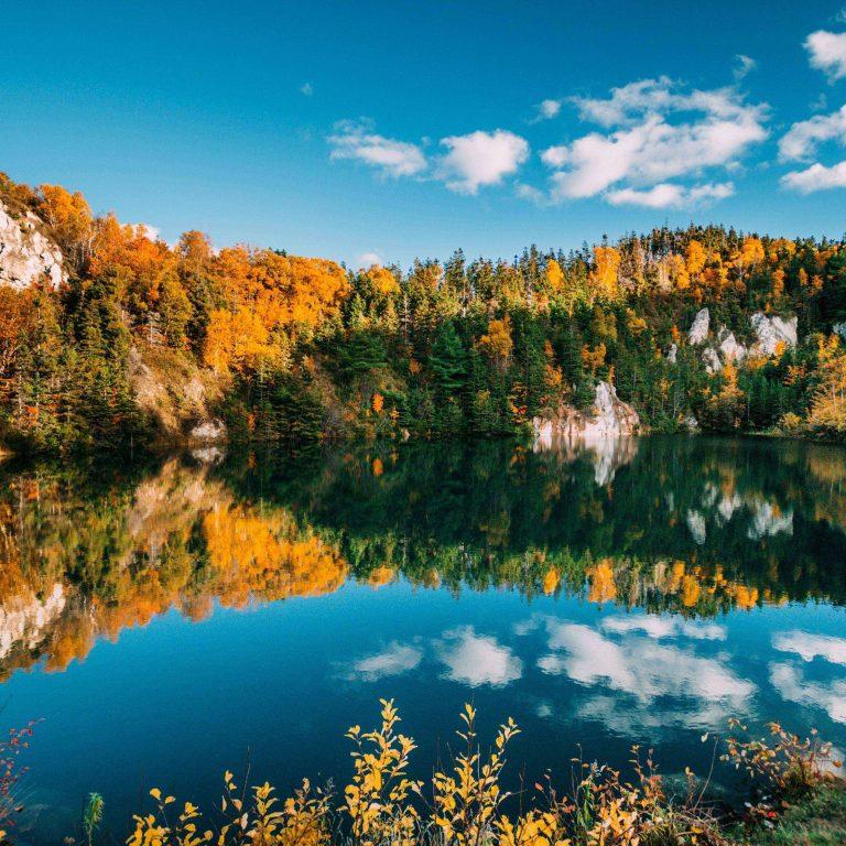 Autumn Lake Trees 2780x2780 768x768
