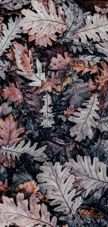 Autumn Leaves Brown 1080x2270 380x799