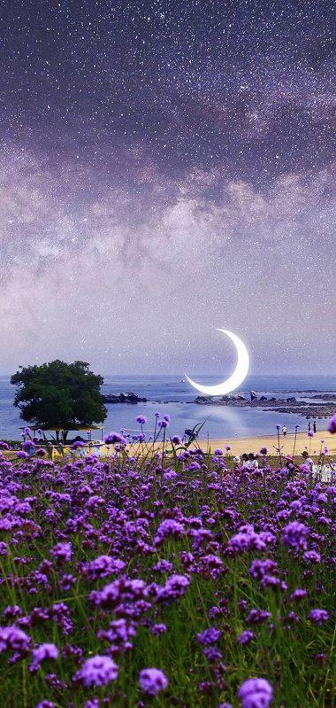 Beautiful Purple Flowers View 1080x2270 380x799